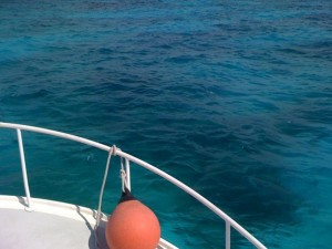 Gorgeous waters tempt our Key Largo divers