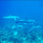 A pod of dolphin showed up on the reef to amaze us